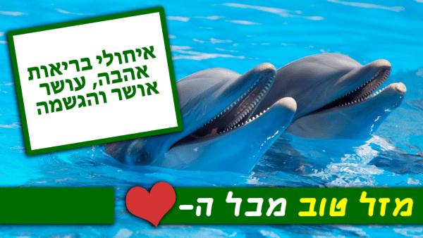 מגנטה - ברכה ליום הולדת, מסגרת לברכה מזל טוב יום הולדת שמח - דולפינים