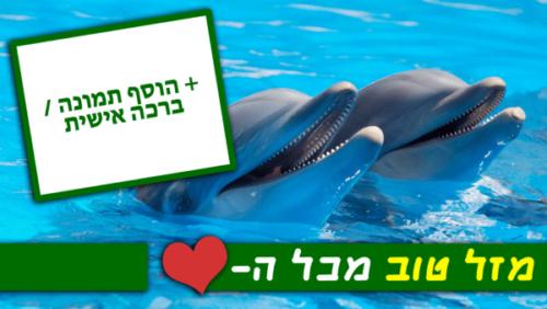 מגנטה - ברכות ליום הולדת, מסגרות לברכות עם תמונות ליום הולדת שמח - דולפינים (4)