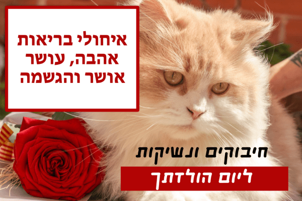 מגנטה - ברכה ליום הולדת, מסגרת לברכה מזל טוב יום הולדת שמח - חתול ורד אדום