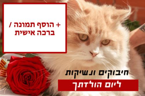מגנטה - ברכות ליום הולדת, מסגרות לברכות עם תמונות ליום הולדת שמח - חתול ופרח (4)
