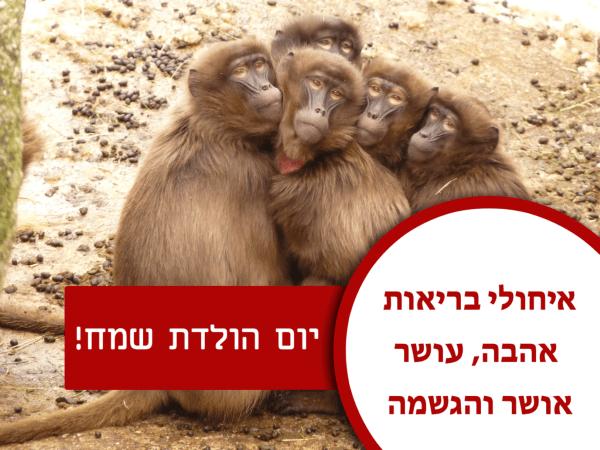 מגנטה - ברכה ליום הולדת, מסגרת לברכה מזל טוב יום הולדת שמח - קופים