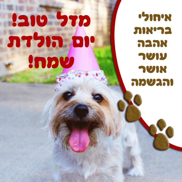 מגנטה - ברכה ליום הולדת, מסגרת לברכה מזל טוב יום הולדת שמח - כלב כובע ליצן