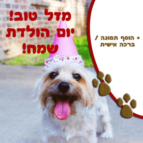 מגנטה - ברכות ליום הולדת, מסגרות לברכות עם תמונות ליום הולדת שמח - כלב מזל טוב! יום הולדת שמח!