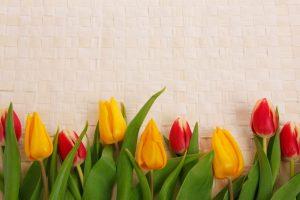 מסגרת לברכה ליום הולדת - פרחים (6)