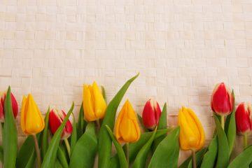 מסגרת לברכה ליום הולדת – יום הולדת שמח פרחים – 9